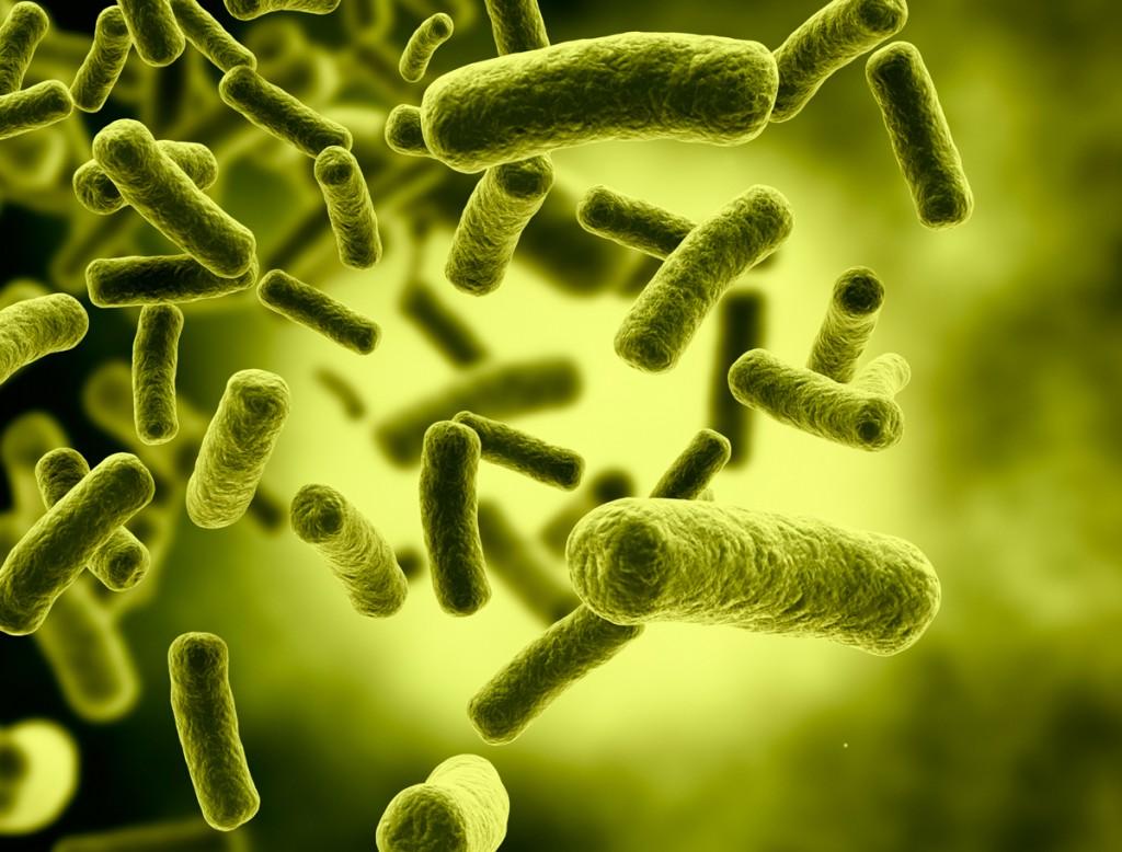 simptomele infecției cu viermi rotunzi la adulți