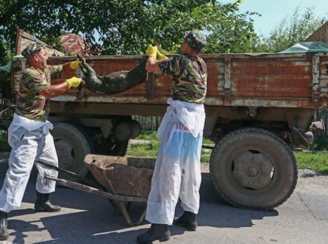 A apărut primul caz de pestă porcină în județul Buzău