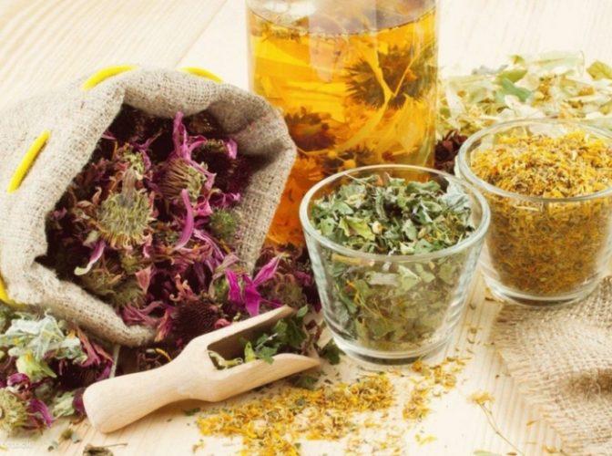 Planta minune care poate fi un remediu pentru Alzheimer dar și stupefiant